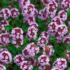 Экстракт чабреца сухой (Thymus) - нет в наличии