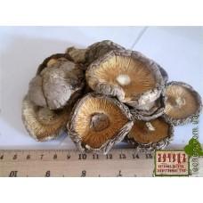 Шиитаке, шитаке, ши-итаке  гриб сушеный (Lentinula edodes)
