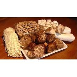 Фунготерапия, лекарственные грибы