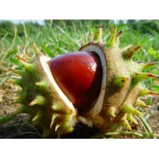 Густой экстракт каштана конского (Aesculus hippocastanum L.)