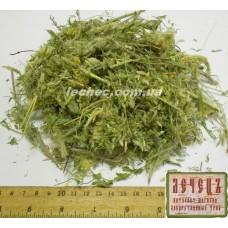 Астрагал шерстистоцветковый трава (Astragalus dasyanthus Pall.)