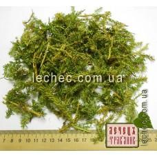 Баранец трава (Huperzia selago)