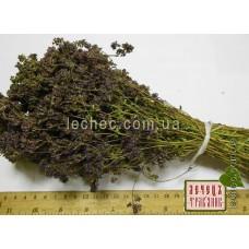 Душица обыкновенная материнка трава (Origanum vulgare)