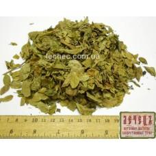 Грушанка круглолистная трава (Pyrola rotundifolia)