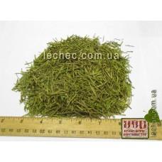 Хвощ полевой трава (Equisetum arvense)