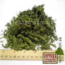 Крапива двудомная лист (Urtica dioica)