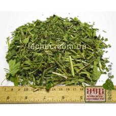 Лофант анисовый трава (Lophanthus anisatus Benth.)