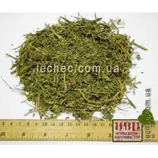 Шлемник байкальский  трава (Scutellaria baicalinensis)