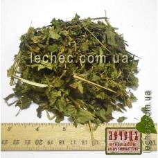 Сныть обыкновенная трава (Aegopodium podagraria)