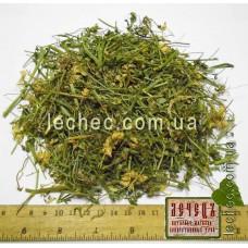 Вязель пестрый трава (Coronilla varia)