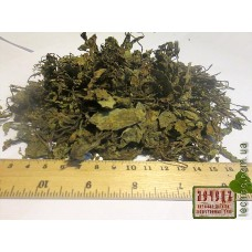 Лофант тибетский трава (Agastachys rugosa), (Louphfantus tibeticus)