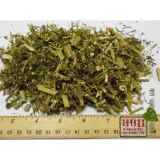 Болиголов трава ( Conium maculatum)