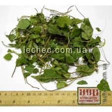Боровая матка, ортилия однобокая-трава (Orthilia secunda)