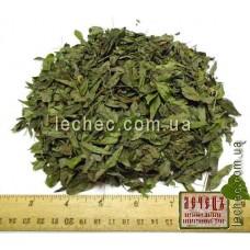 Чина черная трава (Lathyrus niger (L.)