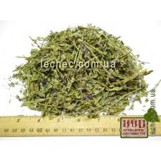 Дербенник иволистный, плакун-трава (Lythrum salicaria)