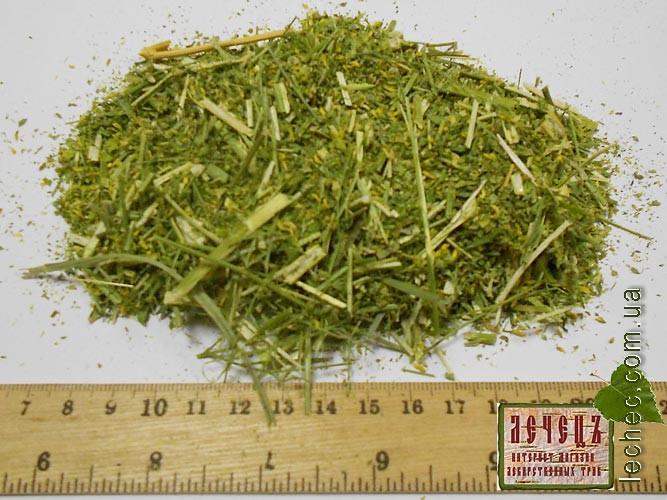 фото трава донник