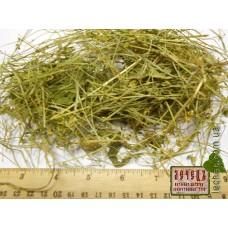 Дрок красильный трава (Genista tinctoria)