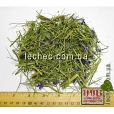 Живокость полевая, сокирки, трава (Delphinium)