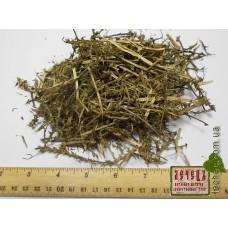 Солянка холмовая трава (Salsola collina Pall.)