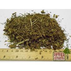 Вероника лекарственная трава (Vеrоniса Оffiсinаlis L.)