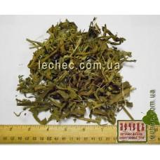 Воловик лекарственный трава (Анхуза лекарственная) (Anchusa officinalis)