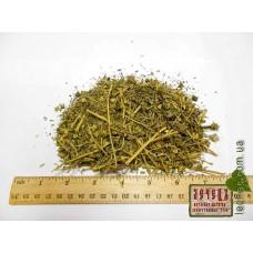 Якорцы стелющиеся трава (Tribulus terrestris)