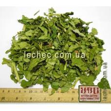 Ясенец кавказский трава (Dictamnus caucasicus)