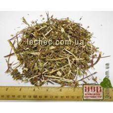Змееголовник молдавский трава (Dracocephalum moldavicum). ТОВАРА НЕТ В НАЛИЧИИ!!!