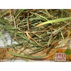 Зубровка душистая трава (Hierochloe odorata)