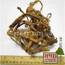 Красный корень, копеечник чайный (Hedysarum theinum Krasnob)