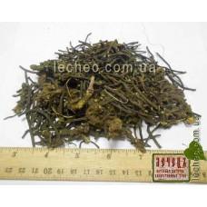 Морозник кавказский корень  (Helleborus caucasicum A. Br.)