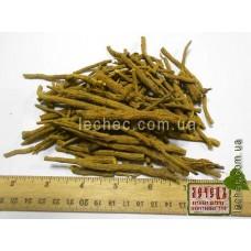 Шлемник байкальский  корень (Scutellaria baicalinensis)