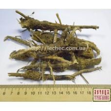 Вайда красильная (Isatis tinctoria) корень