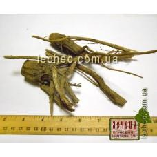 Ворсянка щетинистая корень (Dipsacus strigosus Willd). ТОВАРА НЕТ В НАЛИЧИИ!!!