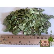 Брусника обыкновенная лист (Vaccinium vitisidaea L.)