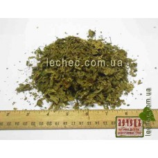 Ежевика сизая лист  (Rubus caesius)
