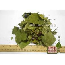 Калина обыкновенная лист (Viburnum opulus)