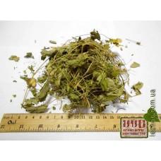 Земляника лесная  трава с листом (Fragaria)