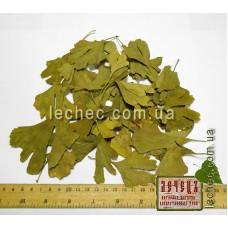 Гинкго билоба, гинкго двулопастный лист (Ginkgo biloba L. Mant.) сбор 2016