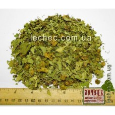 Держи-дерево, листья с плодами (Paliurus spina-christi Mill)