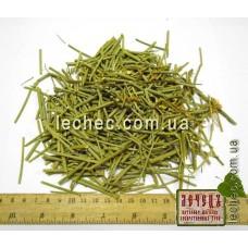 Дрок испанский побеги с цветком (Spartium junceum L)