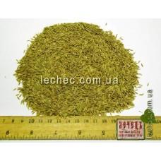 Овсяница луговая семена для посева (Festuca pratensis)