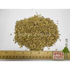 Расторопша пятнистая семена (Silybum marianum (L.) Gaertn.)