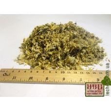 Акация белая цвет (Acacia alba Robinia pseudoacacia)
