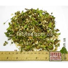 Вишня цветок (Cerasus vulgaris L.)