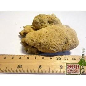 Бадяга-речная губка (Spongilla lacustris)