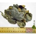 Мейтаке гриб целый алтайский (Grifola frondosa)