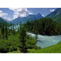 Алтайские бальзамы, алтайские масла