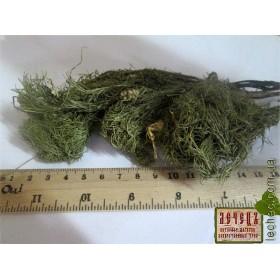 Адонис трава (Adonis)