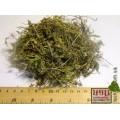 Чабрец трава (Thymus serpyllum )